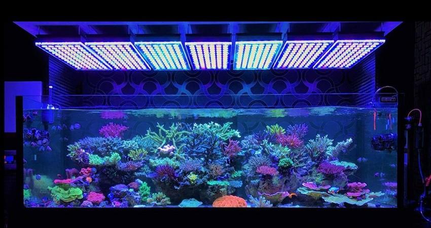 Какую воду заливать в аквариумы?